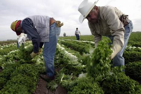 Farmers and children the main victims of Alabama's new draconian law   Full Comment   National Post   Food issues   Scoop.it