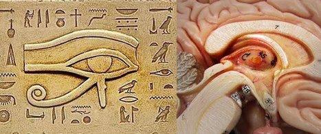 Descartes : La glande pinéale est le siège de l'Âme. Nouveaux aperçus   spiritualité, médiumnite, parapsychologie   Scoop.it