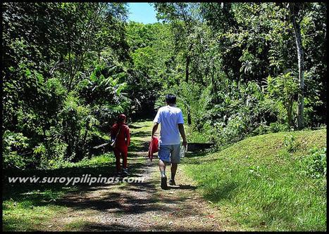 SUROY PILIPINAS - A Philippine Travel Blog: Bukidnon: Saturday Hike in Musuan Peak   Travel   Scoop.it
