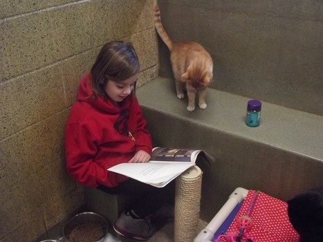 Animal Shelter Encourages Kids To Read To Homeless Cats   MyCoopNYC   Scoop.it