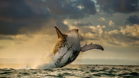 2014 Best Animal Photos_10   photography and art   Scoop.it