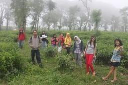 Kebun Teh Lawang | tempatwisata | Scoop.it