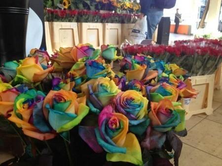 Rainbow Roses « NextNature.net   DigitAG& journal   Scoop.it
