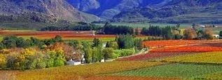Cape Winelands – The Wine Capital Of South Africa | Table Mountain - Great View Of Cape Town | Scoop.it