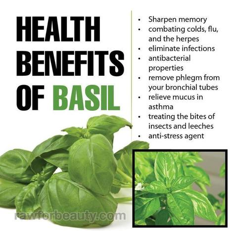 Health Benefits of Basil | Good for your health | Scoop.it