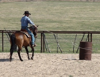 The Power Of Positive Patterns For Horses   The Natural Horse   Scoop.it
