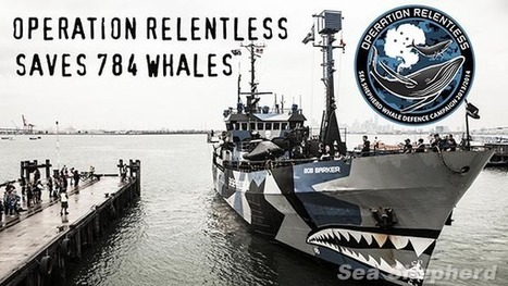 Sea Shepherd Australia :: Operation Relentless saves 784 #Whales | Rescue our Ocean's & it's species from Man's Pollution! | Scoop.it