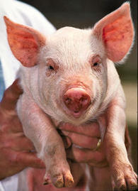 Would You Be Nice to a Chauvinist Pig? | Psychology and Brain News | Scoop.it
