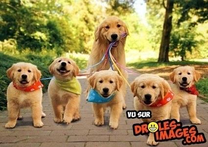 Une petite promenade en famille | Trollface , meme et humour 2.0 | Scoop.it