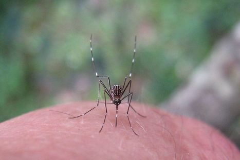 World's first dengue vaccine has been approved in three countries | Vaxfax Monitor | Scoop.it