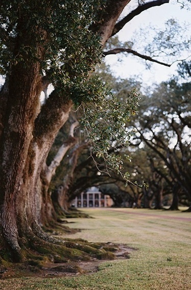 New Orleans, Louisiana, USA | Oak Alley Plantation: Things to see! | Scoop.it