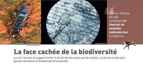 Le sol est un des plus grands réservoirs de biodiversité de la planète | Agriculture citadine | Scoop.it