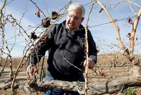 TEMECULA: Sharpshooter attack defining moment for Wine Country - Press-Enterprise | WINERY Tourism | Scoop.it