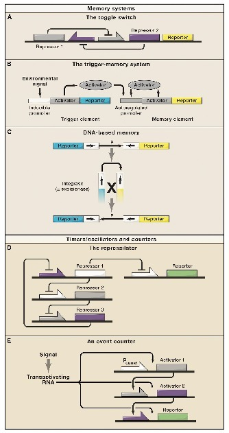 Integrating Biological Redesign:  Where Synthetic Biology Came From and Where It Needs to Go   Biomedical synthetic biology   Scoop.it