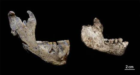 Human ancestors at West Asian site deemed two species   Science News   Ancient Civilization   Scoop.it