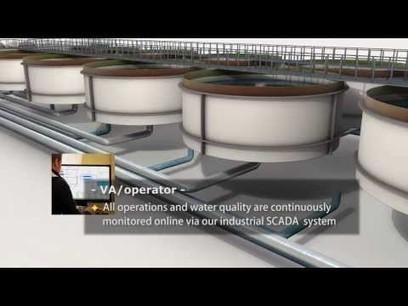 Kaldnes® RAS, Recirculating Aquaculture System ... | Aquaculture (Global Aqua Link) | Scoop.it