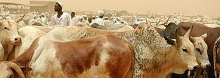 FAO's Animal Production and Health Division   Sustainable Livestock development   Scoop.it