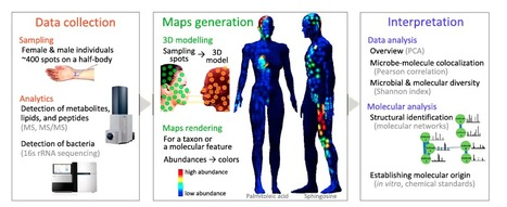 Molecular cartography of the human skin surface in 3D | Science, Technology, and Current Futurism | Scoop.it