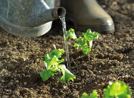 Comment arroser les légumes, variété par variété | Agriculture urbaine, architecture et urbanisme durable | Scoop.it