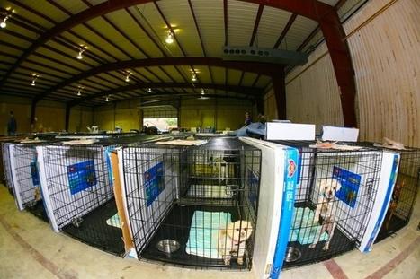 UCLA Sued Over Primate Testing - Global Animal | Animal Welfare Laws | Scoop.it