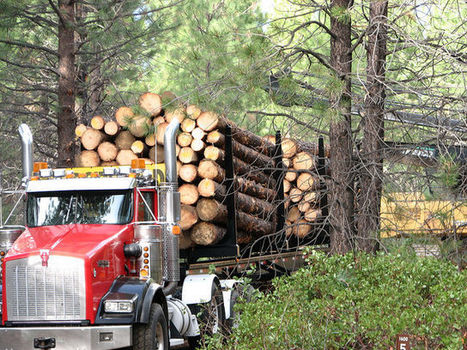 'New Conservationists' Push for Logging to Prevent Wildfires   Timberland Investment   Scoop.it