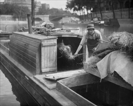 Une péniche écurie sur la Seine | Histoire(s) de Paris | GenealoNet | Scoop.it