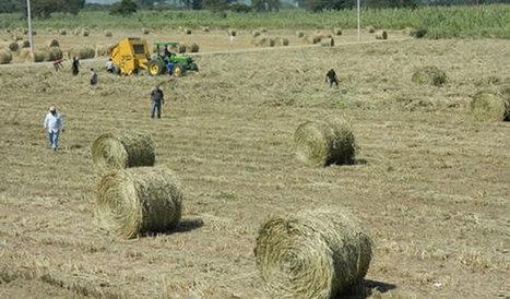 Biomasa bajará costos energéticos   BIOMASA   Scoop.it