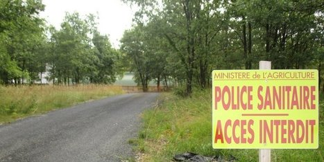 Grippe aviaire en Dordogne : ce nouveau foyer est-il inquiétant ? | Agriculture en Dordogne | Scoop.it