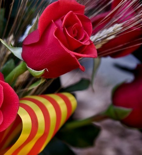 Tuesday 23 April - Open Day at the Barcelona City Council to celebrate Sant Jordi | AinB - Your Apartments in Barcelona | Scoop.it