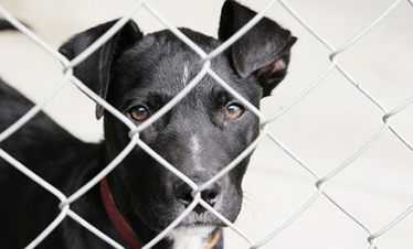 8 Things You Didn't Know About Rescue Animals | Care2 Healthy ... | Second Chance with Saving Grace (SCwSG), Inc. | Scoop.it