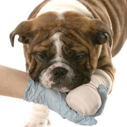 Dealing with an Injured Dog | Dog Traning | Scoop.it