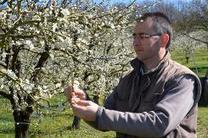 Plumping up shrivelled market for France's famed prunes | AFP.com | The France News Net - Latest stories | Scoop.it