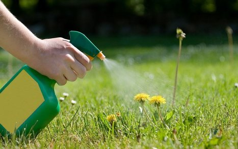 7 Awesome Lawn and Garden Hacks for Your Yard | Gardening | Scoop.it