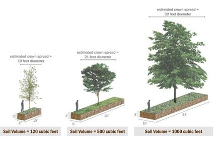 High Performance Urban Forestry for Green Infrastructure | DeepRoot Blog | Urban, Suburban, and Campus Forests: Conservation and Curation | Scoop.it