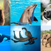 When does an animal count as a person? - io9 | Education Reform and Innovation and Spiritual Consciousness | Scoop.it