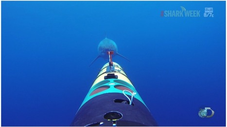 The shark-tracking camera that kept rolling when a great white ... | Underwater Robotics | Scoop.it