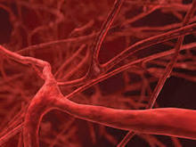 Blood, Sweat, and Tears: Researchers Say 3D Printing of Working Blood Vessels Possible | Health, Digital Health, mHealth, Digital Pharma, hcsm latest trends and news (in English) | Scoop.it