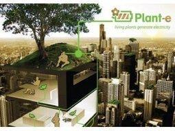 Comment produire de l'électricité à partir des plantes ?   Climat   Scoop.it
