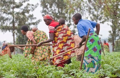 INSIDE AFRICA: African Agriculture Status Report 2013 | Agricultural & Horticultural Industry News | Scoop.it