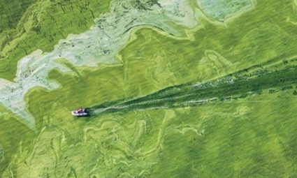 International Panel Recommends Nutrient Diet to Battle Toxic Algal Blooms in Lake Erie | EcoWatch | EcoWatch | Scoop.it