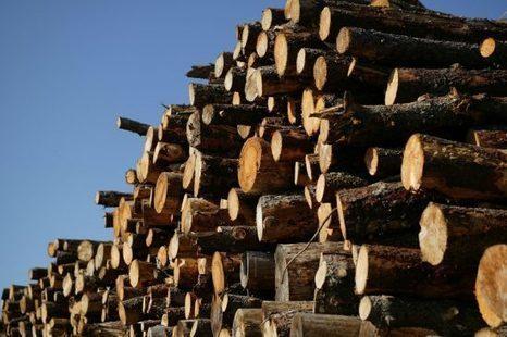 Bouygues, Eiffage, Saint-Gobain et Vinci épinglés par WWF pour leur approvisionnement en bois   Confidences Canopéennes   Scoop.it