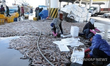 Chinese boats' overfishing dents squid haul in East Sea | All about water, the oceans, environmental issues | Scoop.it