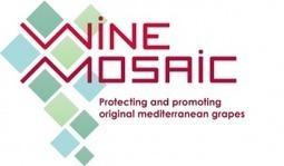 Wine Mozaic, projet de défense des cépages méditerranéen   Du raisin au vin   Scoop.it