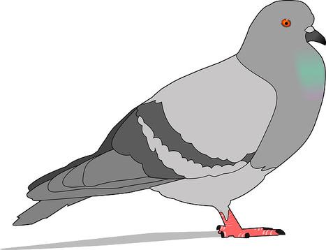 Google « Pigeon » le nouvel algorithme de référencement local | [SEO] Référencement naturel & e-marketing | Scoop.it