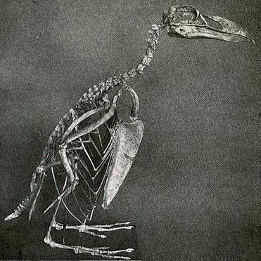 «La Sixième Extinction»: l'homme détruit la vie, il faut lire le livre qui le raconte enfin | Les plans cul[ture] de la rédac | Rue89 Les blogs | ecology and economic | Scoop.it