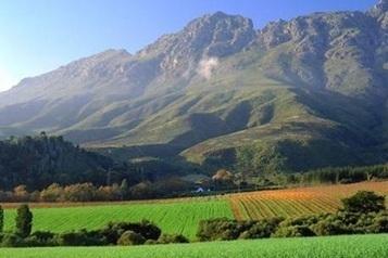 South Africa's 2014 wine harvest set for 'mild decline' | The Wine & Spirits Market | Scoop.it