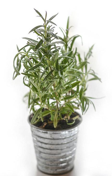 11 plantas, hierbas y flores que mejoran el estado de ánimo   Mil Ideas de Decoración   Decoración de interiores   Scoop.it