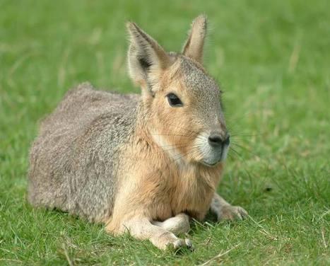 Τα 10 πιο παράξενα ζώα του κόσμου! | dinfo.gr - Παράξενα, χιούμορ, βίντεο και φωτογραφίες | Ζωα | Scoop.it