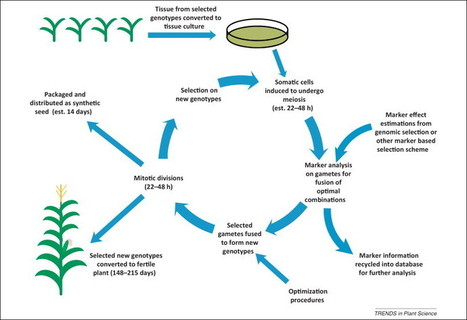 Accelerating plant breeding (Trends in Plant Science 2014) | biotechnology | Scoop.it