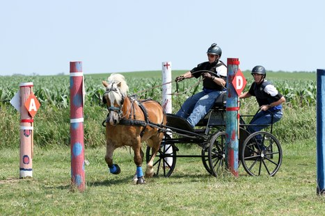 Skunk River DT - Best of Iowa in Traces Society | Carriage Driving Radio Show | Scoop.it